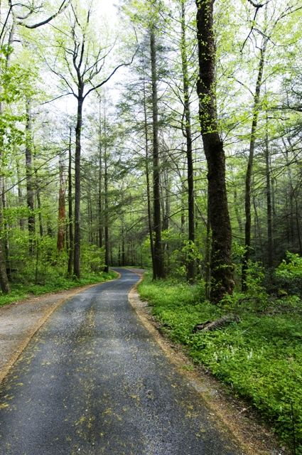 Roaring Fork Motor Nature Trail - A 6 mile long scenic drive offering views of rushing mountain streams, old growth forest and a number of historic buildings.