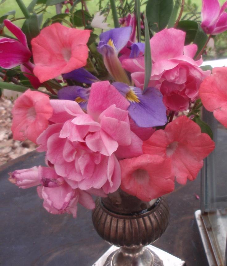roses and petunias in Feb