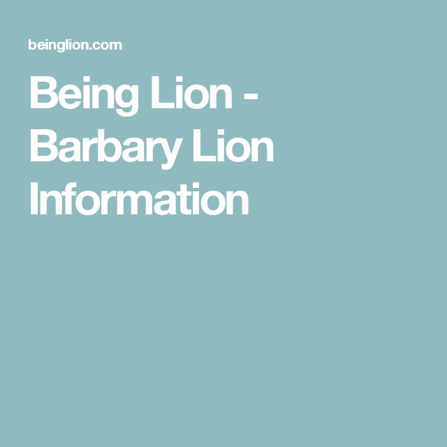 Being Lion - Barbary Lion Information