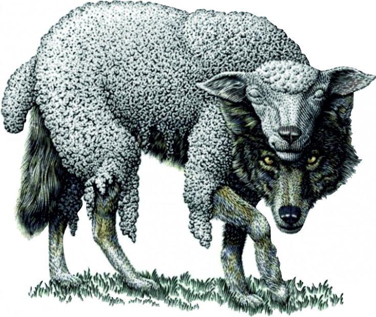 идеально картинки волки овечка мог