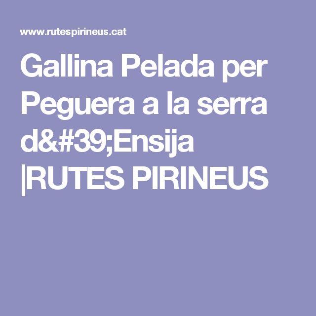 Gallina Pelada per Peguera a la serra d'Ensija  |RUTES PIRINEUS