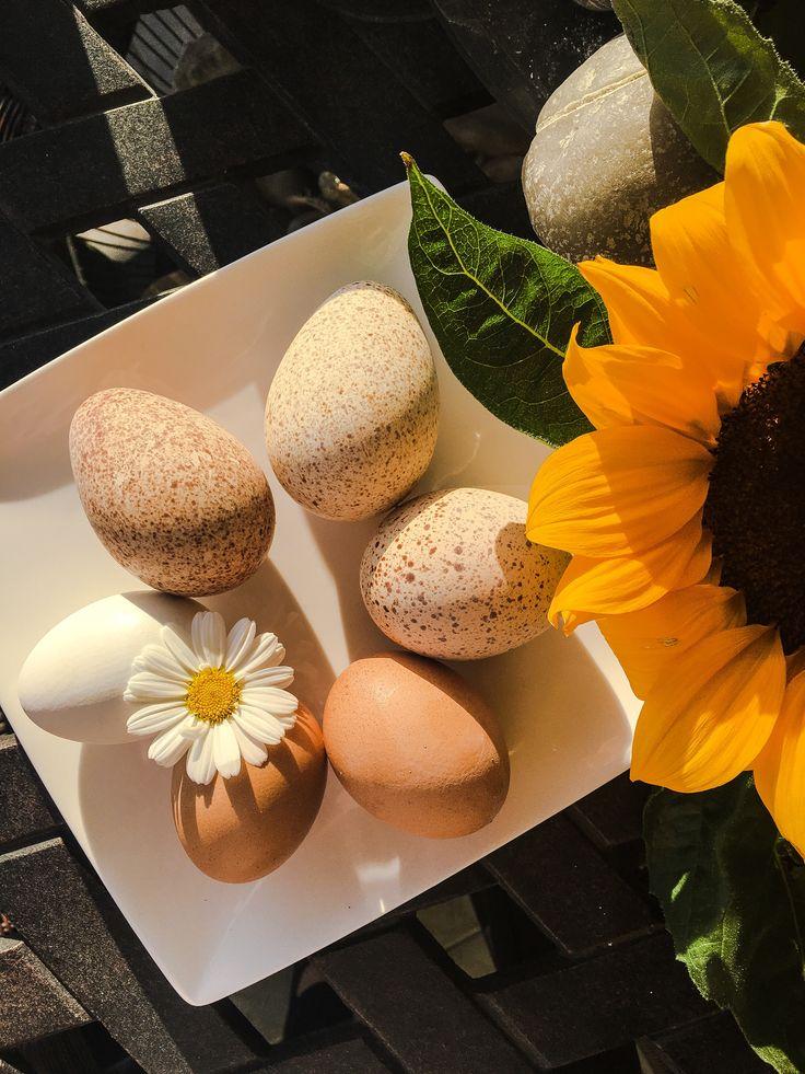 Πότε ήταν η τελευταία φορά που έβαλες κάτι νέο στο πιάτο σου;  Το διαβάζεις παντού - η διατροφή μας πρέπει να έχει ποικιλία για να είμαστε σίγουροι ότι τρεφόμαστε ισσοροπημένα. Δοκίμασε λοιπόν κάτι νέο αυτή τη βδομάδα!  Τα αυγά με τα στίγματα είναι αυγά γαλοπούλας! Τα βρήκα στην βιολογική αγορά της Καλαμαριάς (κάθε Τετάρτη)! When was the last time you put something different in your plate? Variety is the key for a balanced diet, try something new this week! The dappled eggs are turkey eggs!