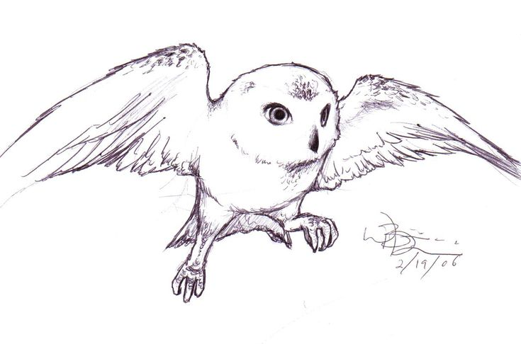 hedwig tattoo | Hedwig Tattoo Harry Potter By Blondboy100886