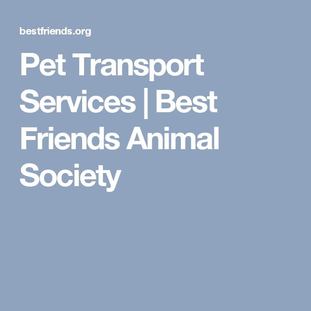 Pet Transport Services | Best Friends Animal Society
