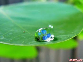 Top 25 hình ảnh giọt nước đọng trên lá lung linh huyền ảo