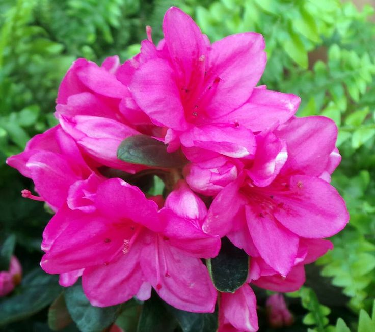 Oggi il sole splende e i fiori del nostro vivaio regalano colori e profumi unici. #aprile #vivaio