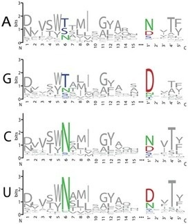 A Combinatorial Amino Acid Code for Sequence-Specific RNA Recognition by Pentatricopeptide Repeat Proteins