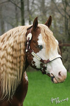 american paint horse - Google Search