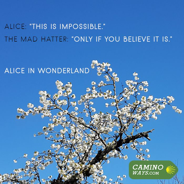Taking inspiration from Alice in Wonderland, nothing is impossible #believe
