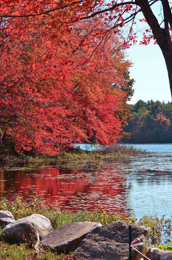Bucket List: to see the fall foliage in New England.