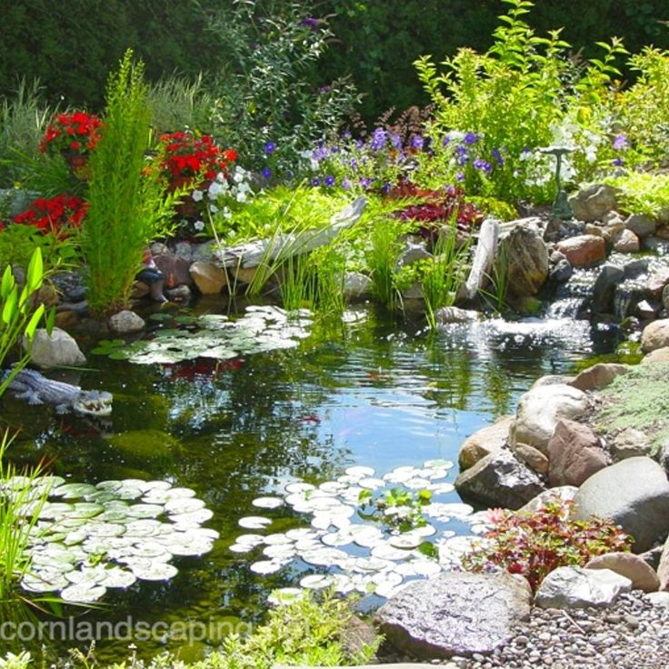 Best 25 pond maintenance ideas on pinterest natural for Garden pond maintenance