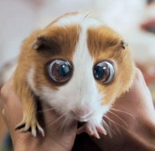 Bedtime+Stories+Hamster Animal image vector clip art