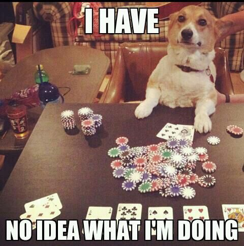 How I feel pretty much every time I play cards.: Ideas, Animals, Poker, Dogs, Corgi, Funnies, Funny Animal, Photo