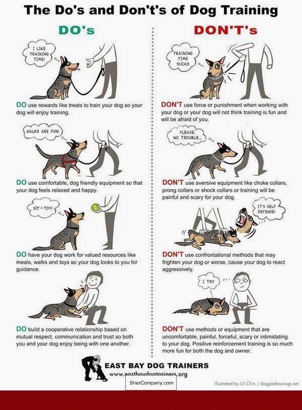 Extreme Dog Training Tips Dog Dogtraining Puppytrainingtips