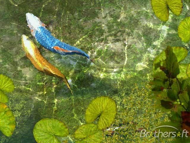 Koi fish 3d 1 0 screenshot inspirations pinterest for Green koi fish