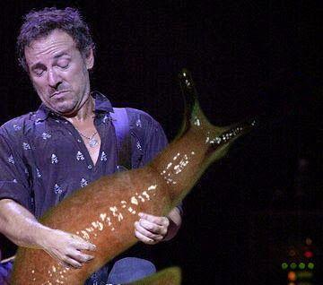 I chitarristi più famosi al mondo che suonano dei lumaconi - Darwinite