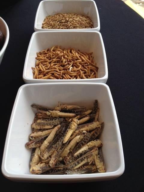 Eet eens een sprinkhaan of meelworm en proef de verrassende smaak van deze insecten!: