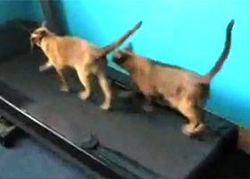 Compilatie video cu pisici haioase.
