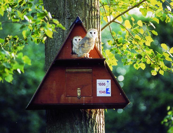 les 109 meilleures images propos de nichoirs pour chouettes et hiboux owls boxes. Black Bedroom Furniture Sets. Home Design Ideas