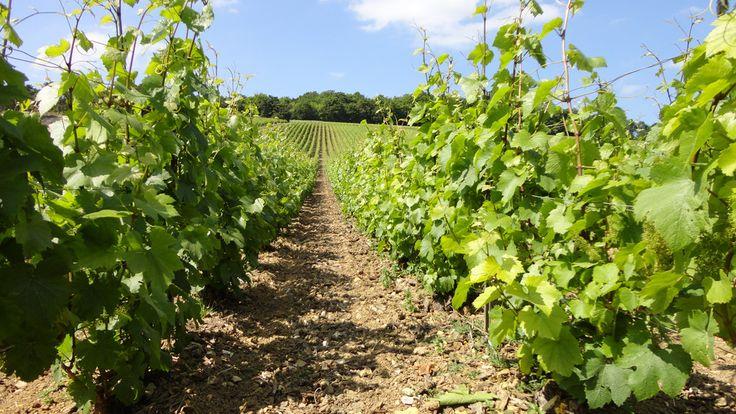 Vignoble#Montgueux#vignerons - Champagne Leroy Meirhaeghe