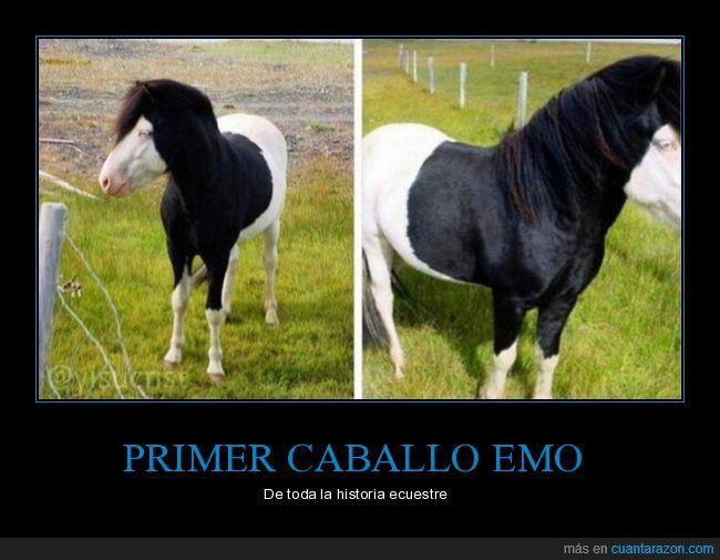 PRIMER CABALLO EMO - De toda la historia ecuestre   Gracias a http://www.cuantarazon.com/   Si quieres leer la noticia completa visita: http://www.skylight-imagen.com/primer-caballo-emo-de-toda-la-historia-ecuestre/