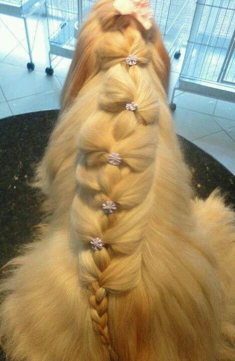 opawz.com supply pet hair dye,pet hair chalk,pet perfume,pet shampoo,spa.... - http://amzn.to/2h50xSk