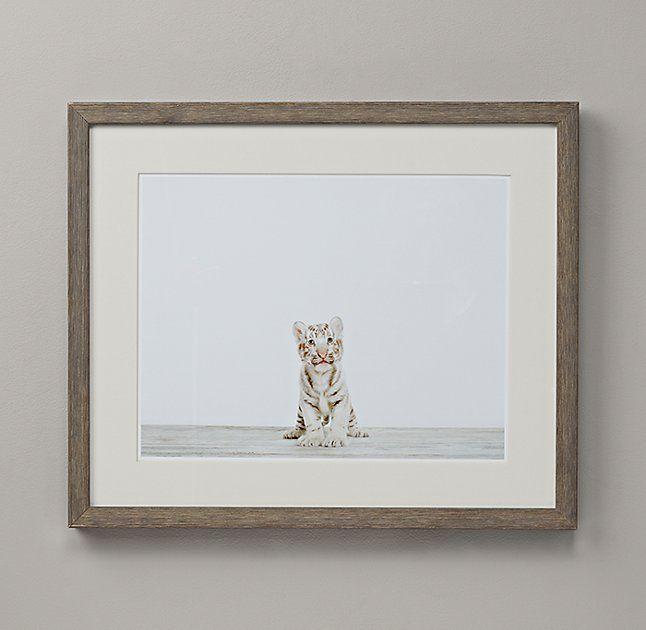 Baby Animal Portrait - Tiger