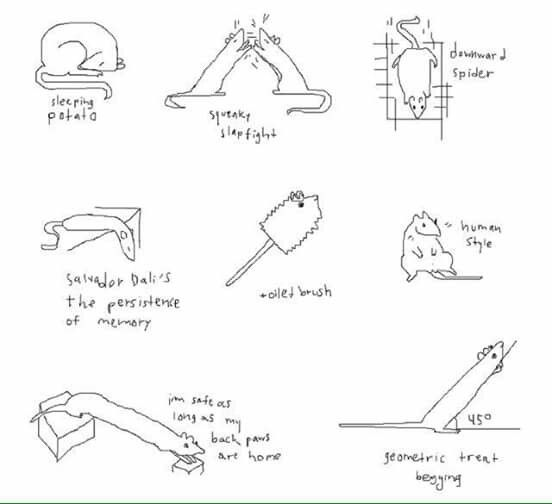 Types of rat 😂