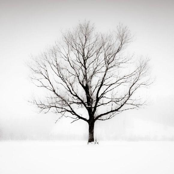 Solitude in White