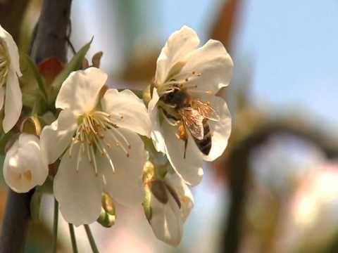 *▶ Bijen in de wereld....