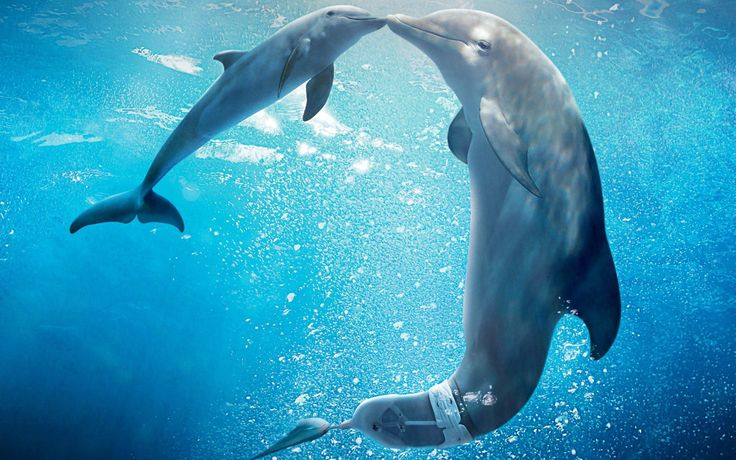 What Do You Know About Dolphin Superpowers