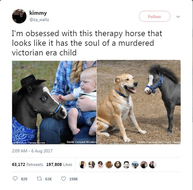 50 Funny and Cute Wweets About Animals