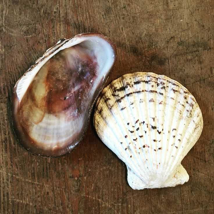 Shells by Rachel Daly