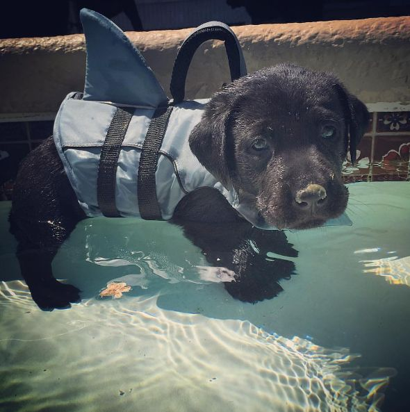 Learning to swim with a shark fin : aww