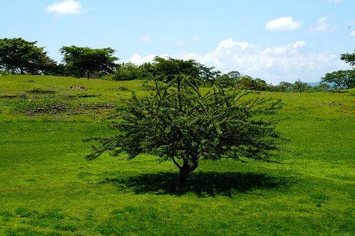 Fa, Fekvő, Természet, Fű, Clouds