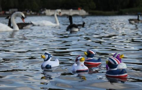 Looks like Team GB ducks are ready to watch the Men's 10km Marathon Swimming competition which takes place in the Serpentine today - available in six different sports from the London 2012 Shop at Hyde Park - the 'Cycling Duck' is proving the most popular, closely followed by 'Rowing Duck'.