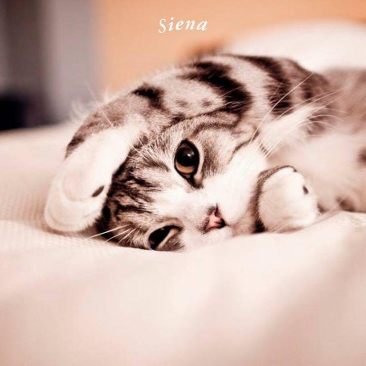¡¡Buenos días!! #Miau  www.casasiena.cl