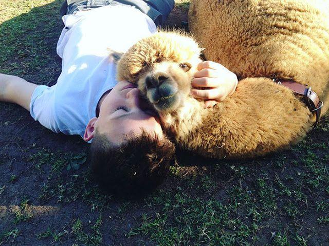 Quero ter uma alpaca! http://bit.ly/1qHsnos