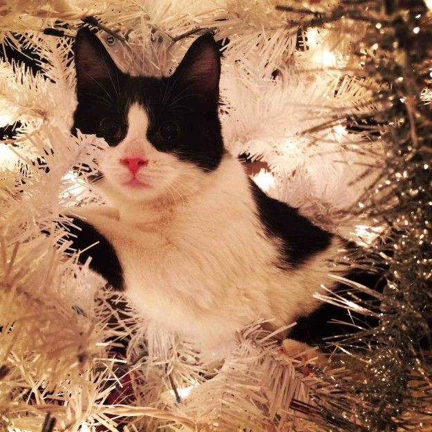 �And, frankly� I�m not sure how to get down. So this is where I will stay.� | 18 Cats Who Are Really, Really Excited About Christmas Trees