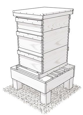 How to build a Langstroth hive (including plans for 8 frame version)