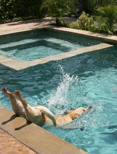 time for a swim!