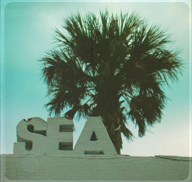 seaBeach Sea, Company Picnics, Summer Picnics, Summer Seasons, Palms Trees, Palm Trees, Beach Life, Beach Ocean Sea, The Sea