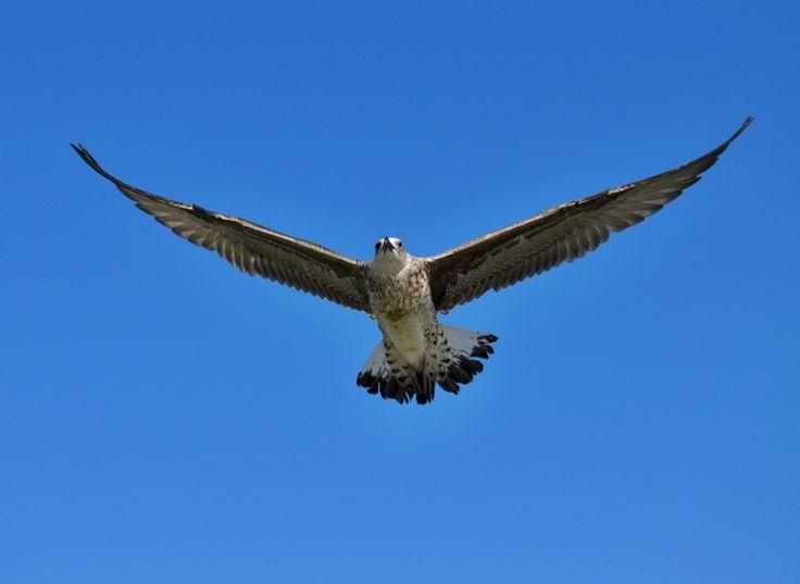 Seagull in Gibraltar   SkyTravelr