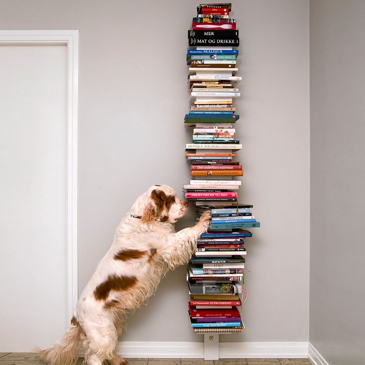 Wow, this must be Prof Meow's home where Woofy is busy finding books for Meow to read.