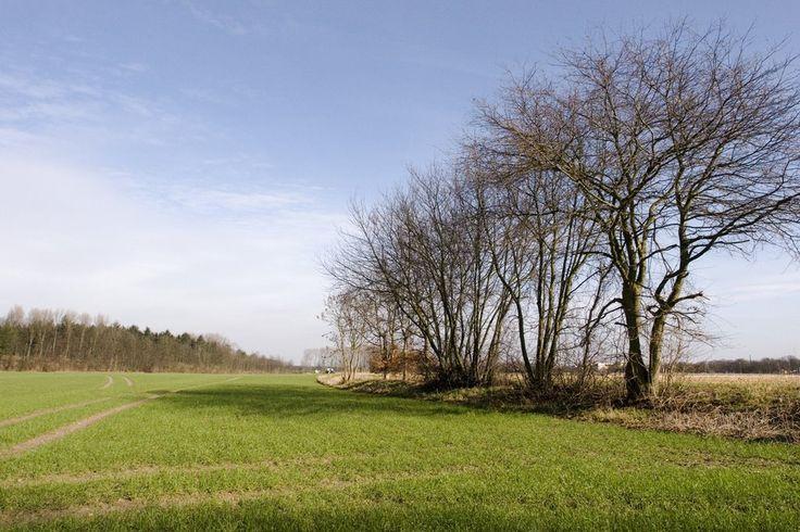 Feld-vor-Tannenbusch