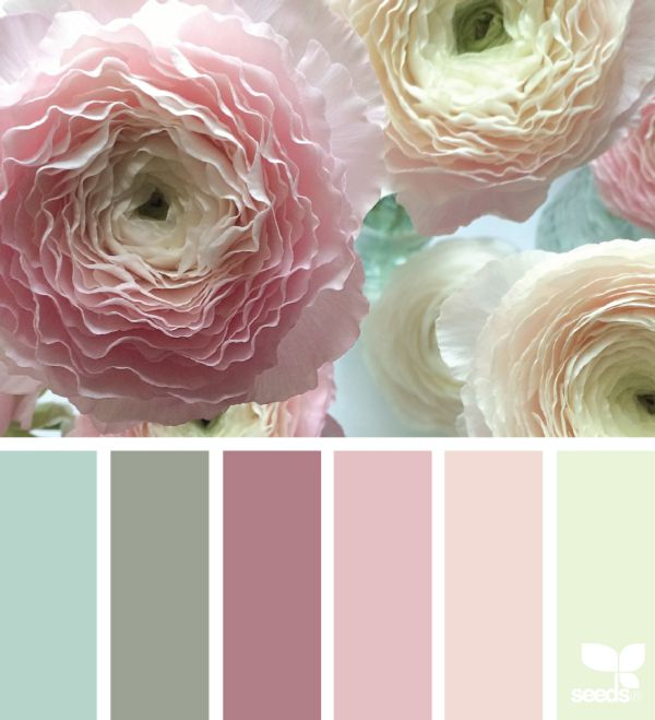Ranunculus - a lovely muted color palette / Design Seeds