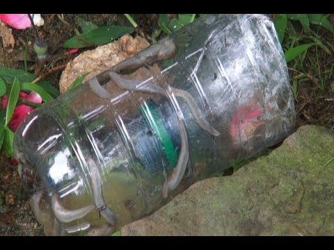 How to Make a Slug Trap..... What a good idea. Beer traps DO work but mine were getting diluted by rain. This method solves that problem. Much better for the garden wildlife than using slug pellets and the slugs die happily. Hic!