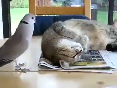 Lovely Birds & Animals…..