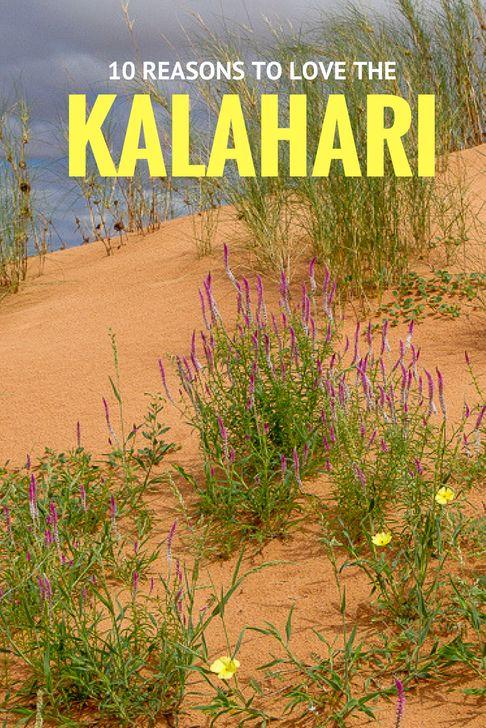 10 reasons to love the Kalahari #Kgalagadi #Kalahari #South Africa #Botswana #afritravel