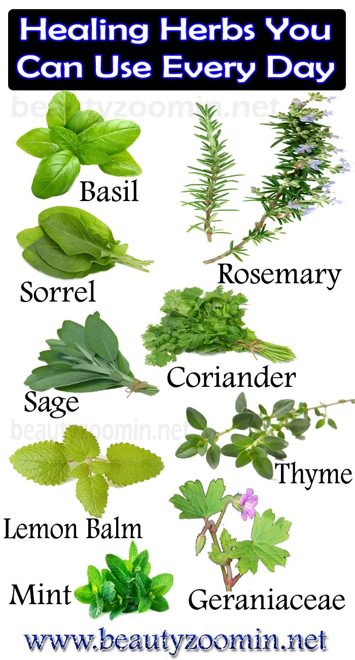 Healing Herbs You Can Use Every Day | Herbs and alternative